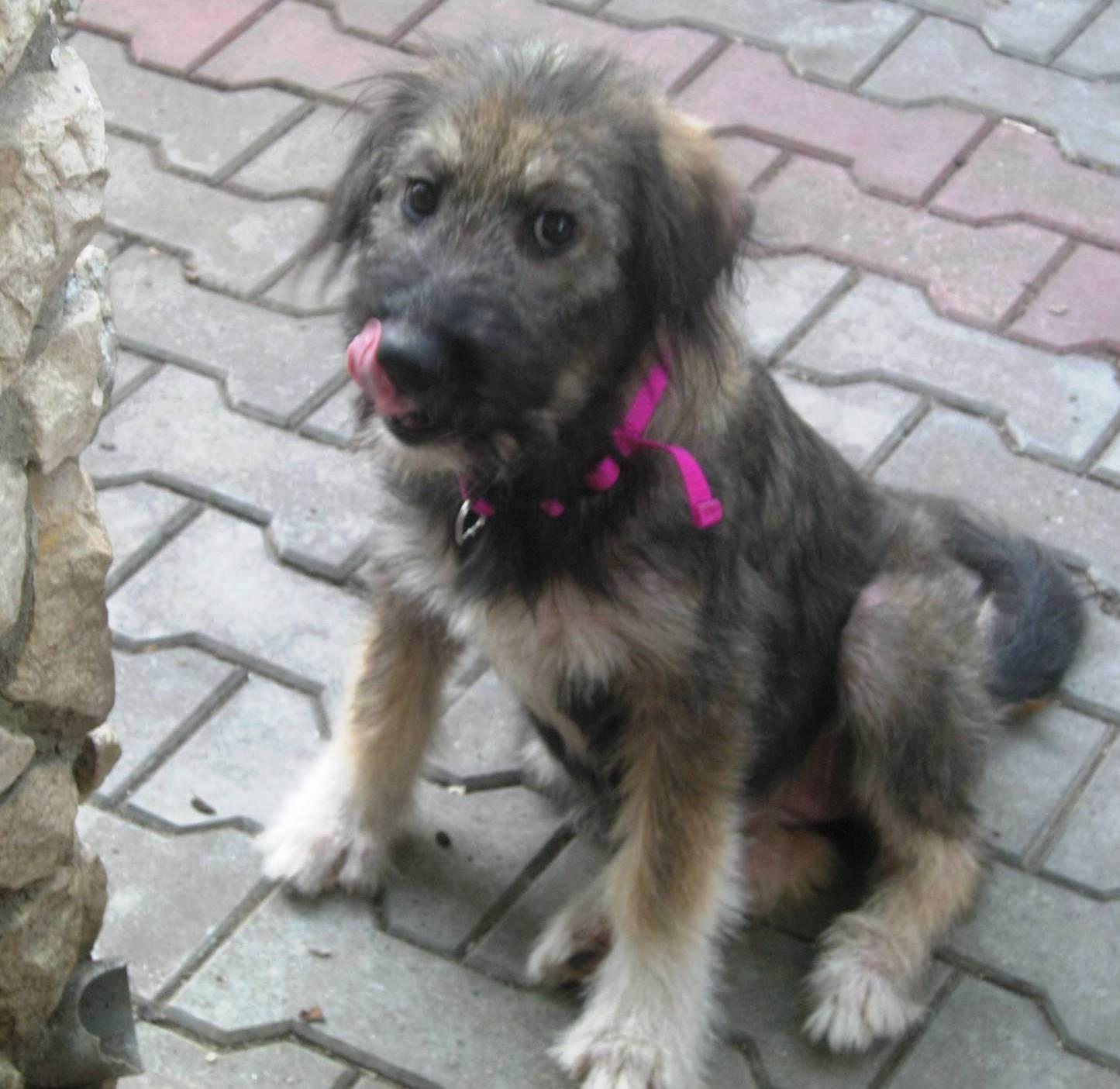 Madison Dog Adoption