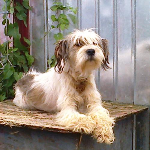 The Scruffy Dog Rescue